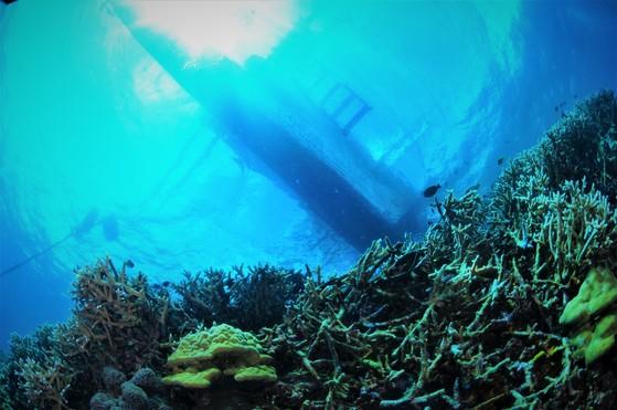 해수면에 비친 방카보트의 그림자. [사진 박동훈]