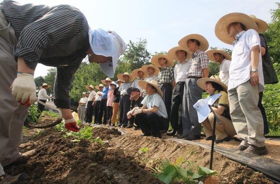 서울시 '서울시농업기술센터'에서 귀농을 꿈꾸는 이들에게 무료로 제공하는 '귀농영농창업교육'. 한 교육생이 고구마 순을 심어보고 있다. [중앙포토]