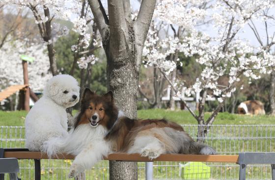 반려동물은 주인의 즐거움이나 이익을 위한 수단이 아닌 하나의 생명으로서 존중되고 사람과 더불어 살면서 교감하는 가족 일원이다. 임현동 기자