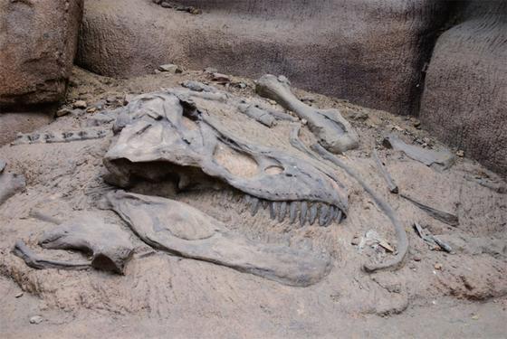 공룡은 6500만년 전 소행성 충돌 후 대멸종을 견디지 못하고 역사 속으로 사라진 것으로 추정된다. / 사진:ⓒ gettyimagesbank