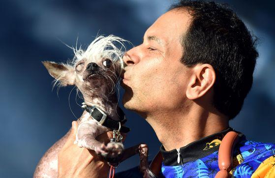 23일(현지시간) 미국 샌프란시스코 소노마 마린에서 열린 세계에서 가장 못생긴 개 대회에 참가한 '라스칼 듀스( Rascal Deux)와 주인 댄 앤드류.[AFP=연합뉴스]