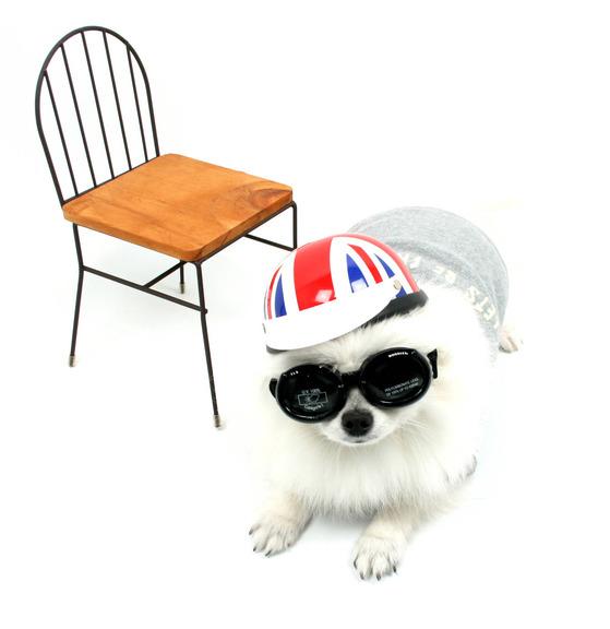 '도글스'의 강아지 시력보호 안경 '도글라스'.