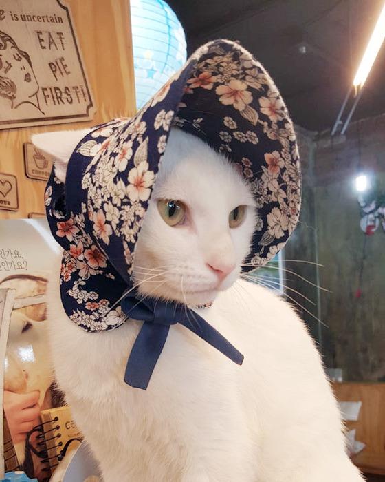 반려동물용 선캡을 착용한 고양이. 단순한 패션 아이템처럼 보이지만 눈부심에 취약한 노령 동물의 시력을 보호하는 기능이 있다. [사진 꼴레트멍멍]