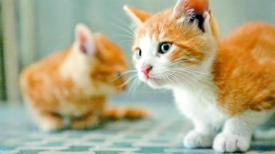 고양이는 청결하고 조용하며 외로움을 덜 느끼기 때문에 직장인이나 1인 가구에서 선호지만, 사회성이 있는 동물이기 때문에 보호자는 물론 다른 동물과의 관계를 중요하게 생각해야 한다. [중앙포토]