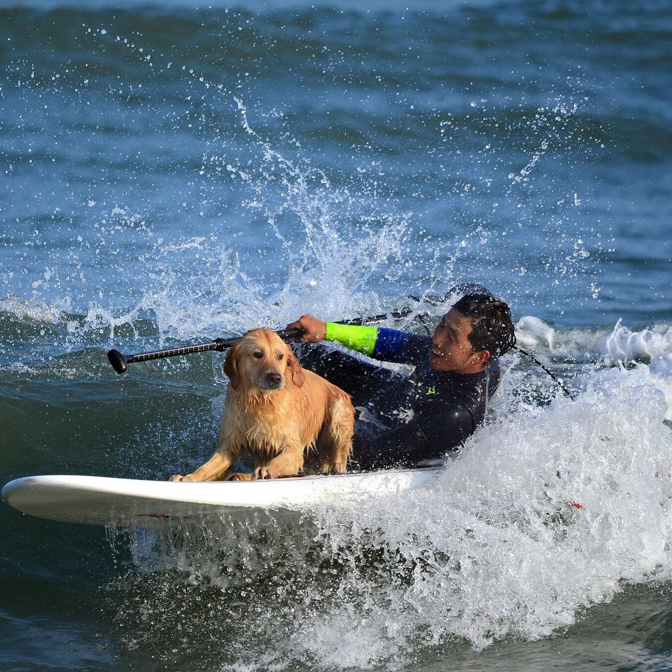 보호자와 서핑을 즐기는 반려견. [중앙포토]