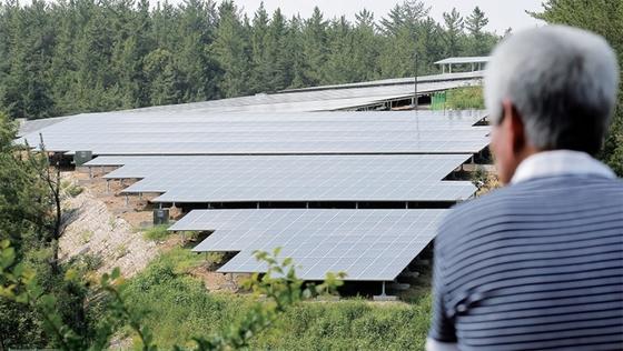 경북 영천시의 한 주민이 마을에 들어서 있는 태양광 발전소를 바라보고 있다. [중앙포토]