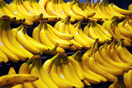 현재 전세계서 가장 널리 상품으로 유통되고 있는 바나나는 '캐번디시' 종이다. 캐번디시 종은 영양생식으로 인해 유전자가 모두 똑같으며 변종 파나마 병에 취약한 특징이 있다. [출처 stevehopson.com]