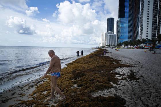 지난 11일(현지시간) 미국 플로리다 써니아일즈 해변에서 관광객들이 번성한 해조류가 밀려온 백사장을 걷고 있다. [AP=연합뉴스]