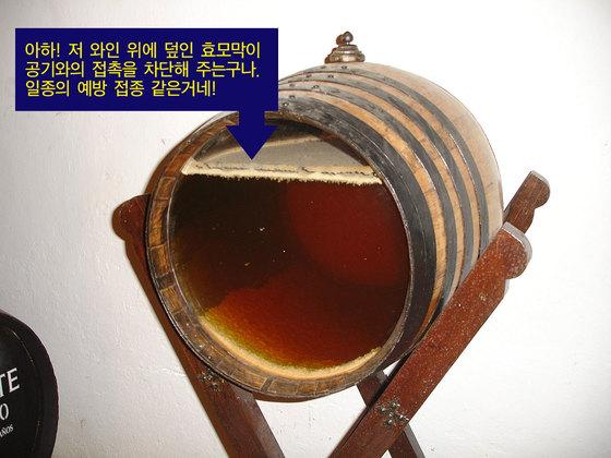 플로르(Flor). 알코올을 넣은 와인 오크통에서 숙성시키는데 이때 와인을 덜 채워놓는다. 이렇게 하면 와인과 공기가 닿는 면에 효모가 쌓여 막을 이루게 된다. [사진 원본 출처 WIKIMEDIA COMMONS(El Pantera)]
