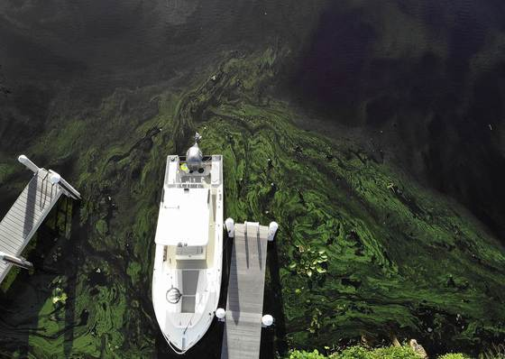 지난 10일(현지시간)미국 플로리다주 오케초비 호수에 정박한 배 주변으로 녹조가 뒤덮혀 있다. [AFP=연합뉴스]