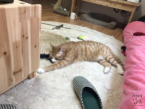 평범한 집사의 거실. TV 테이블 밑의 호피무늬 스크래처는 고양이 스크래처계의 베스트&스테디 셀러다. 우측에 보이는 분홍색 물건은 겨울용 터널. 그 외 어디에나 널브러져 있는 각종 장난감들.