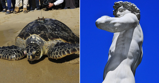 푸른바다거북이(왼쪽)와 미켈란젤로의 다비드상 [중앙포토]