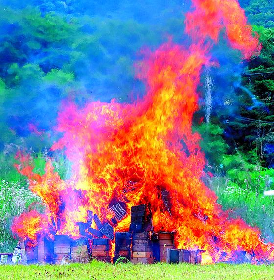 지난달 11일 전남 곡성군 죽곡면 보성강변에서 낭충봉아부패병에 걸린 벌통이 불타오르고 있다. 농민들은 정부에 살처분에 대한 보상을 요구했다. [연합뉴스]