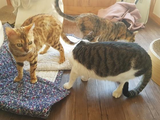 고양이들이 모여 놀고 있다. 사진은 기사 내용과 관련 없음. [중앙포토]