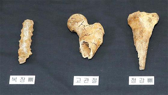 익산 쌍릉 대왕릉에서 발견된 석 점 뼈는 무덤 주인을 추정하는 중요 단서가 됐다. 무왕(武王)이냐 아니냐를 떠나서 백제 톺아보기의 한 실마리다. [뉴시스]