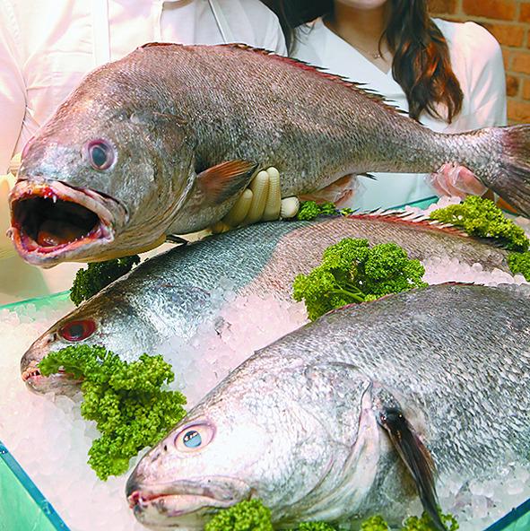 백화점 식품관에서 직원들이 대물 민어를 선보이고 있다. [연합뉴스]