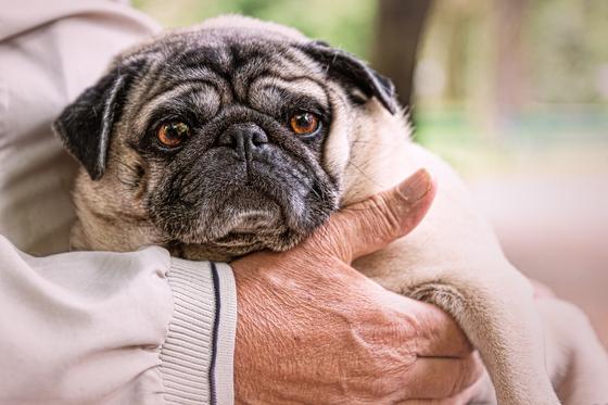 고령층의 정서적 안정감과 우울증 감소를 위해 반려동물을 활용한 치료를 제공하는 치료견(Therapy Dogs)도 있다. [사진 pixabay]