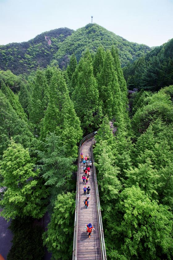 대전 장태산 자연휴양림 봄 풍경. [중앙포토]