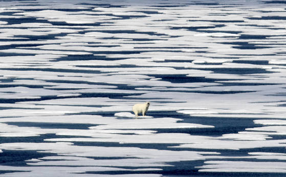 2017 AP YEAR END PHOTOS - A polar bear stands on a patch of ice in the Franklin Strait in the Canadian Arctic Archipelago on July 22, 2017. While some polar bears are expected to follow the retreating ice northward, others will head south, where they will come into greater contact with humans, encounters that are unlikely to end well for the bears. (AP Photo/David Goldman) <저작권자(c) 연합뉴스, 무단 전재-재배포 금지>