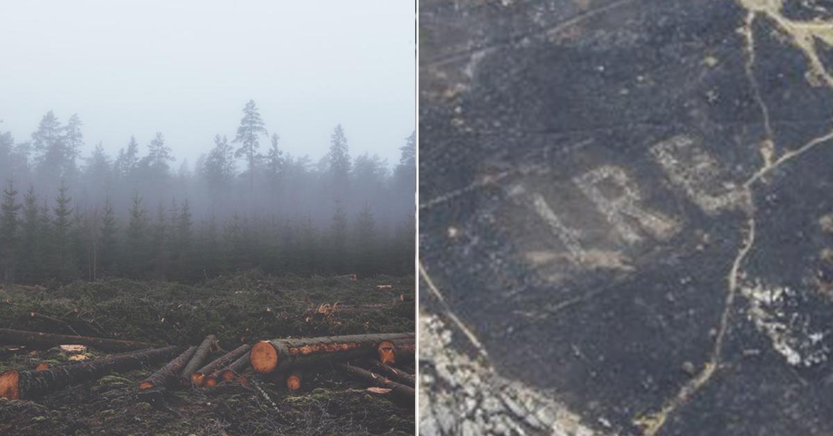 아일랜드 더블린 근교 브레이헤드(Bray Head)에서 발견된 IREA 문자. IREA는 아일랜드어로 아일랜드를 뜻한다. (오른쪽) (왼쪽 사진은 기사와 관계 없는 숲 이미지) [프리큐레이션, AP=연합뉴스]