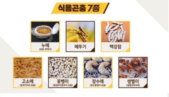 국내에서 식품원료로 허가된 7종의 곤충 [농림수산식품부 홈페이지]