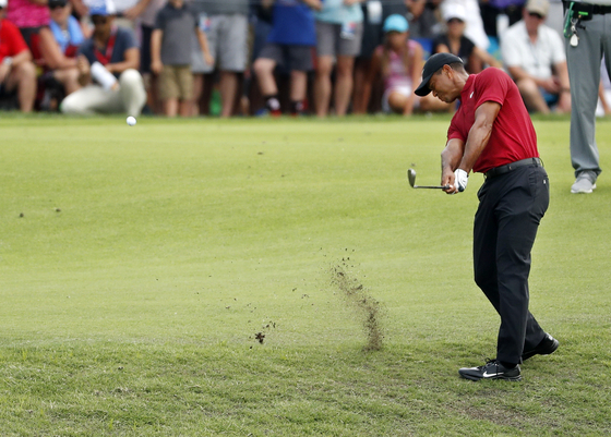 벨레리베 골프장에서 열린 PGA 챔피언십에서 샷을 하는 타이거 우즈. 미국 매체는 조이시아 잔디를 심은 골프장이 많았다면 우즈가 더 많이 우승했을 것이라고 썼다. [AP]