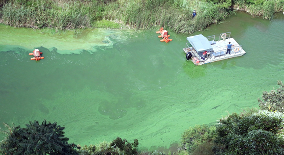 13일 충남 부여군 백제보 일원의 금강 물줄기가 폭염으로 확산된 녹조로 녹색을 띄고 있다. 백제보는 현재 지하수 고갈을 주장하는 농민 민원으로 수문이 닫혀있는 상태이다. [뉴스1]