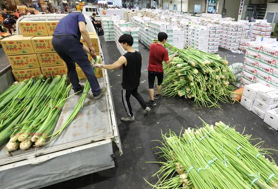 지난 12일 오후 대구농수산물도매시장에서 채소 경매를 앞두고 상인들이 상품을 준비하고 있다. [뉴스1]