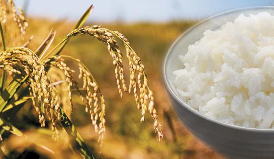 8월 18일은 쌀의 날이다. 한자 쌀 미(米)를 '八' '十' '八'로 파자했다. 쌀을 생산하려면 농부가 여든 여덟 번 수고해야 한다는 의미도 담겼다. 쌀 농사를 위해 열심인 농부의 마음을 생각하며 우리가 먹는 쌀의 가치와 중요성을 돌아보는 날이다.