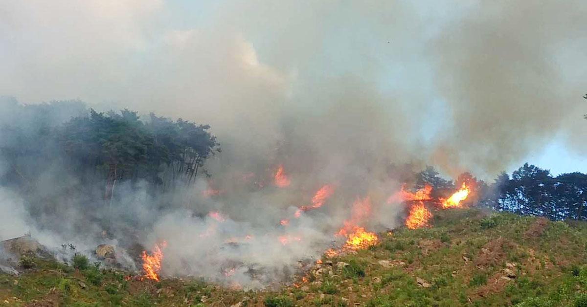 17일 오후 1시46분쯤 강원 춘천시 동면 월곡리 한 야산에서 불이 났다. [뉴스1]