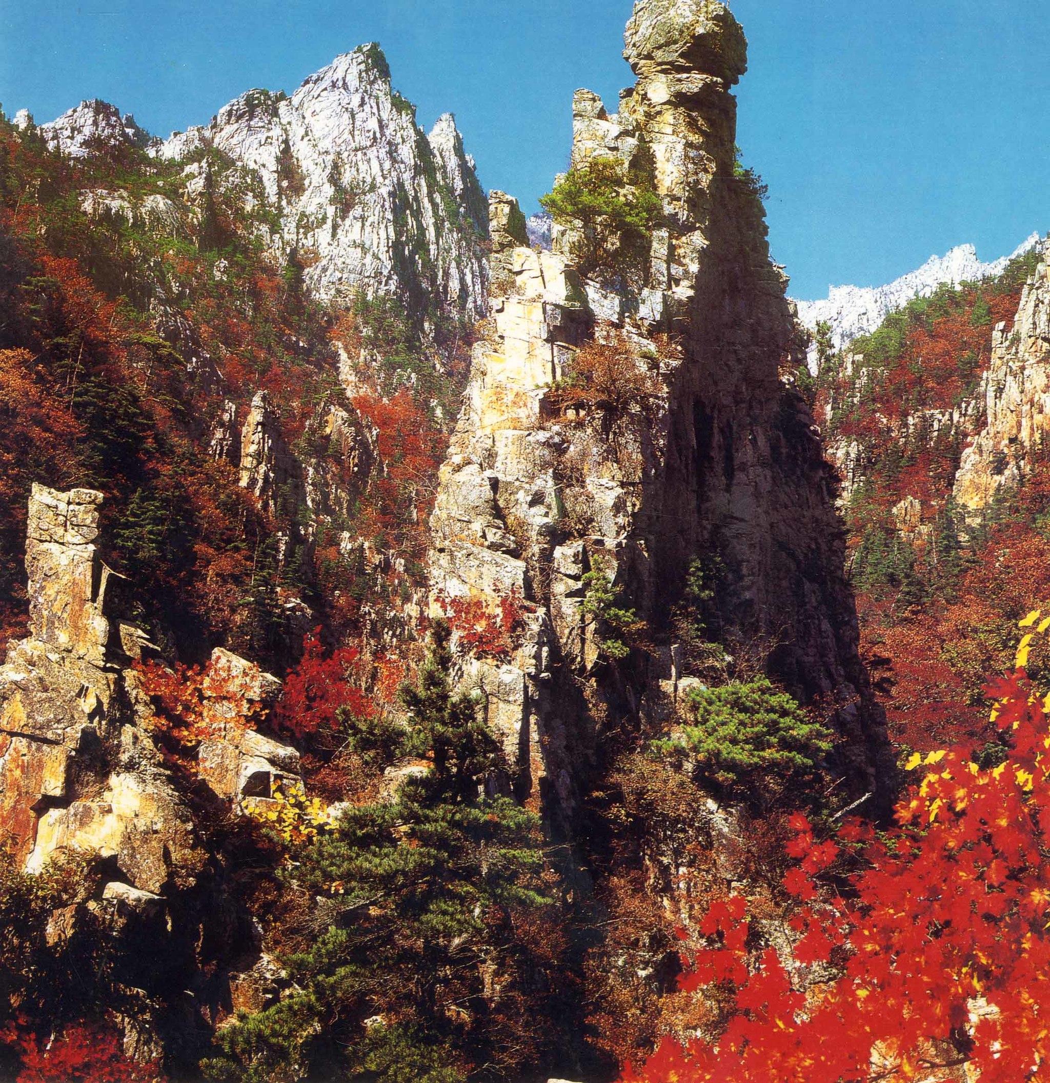 노랗고 빨간 수채화로 그려진 가을의 금강산, 단풍이 바위와 어울려 오묘한 운치를 던져주는 산이라고 해서 가을엔 풍악으로 불린다. 금강산은 지난 7월 유네스코 생물권 보전지역으로 지정됐다. [중앙포토]