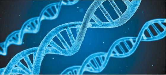 DNA의 모습을 묘사한 이미지. 인간의 유전자는 46개의 염색체에 모두 들어있지만 대부분의 DNA는 기능이 없는 쓰레기로 추정된다 [사진 PIXABAY]