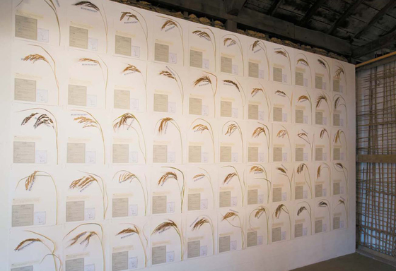 이소요 작가의 토종 벼 표본 55점이 설치된 2층 전시 공간