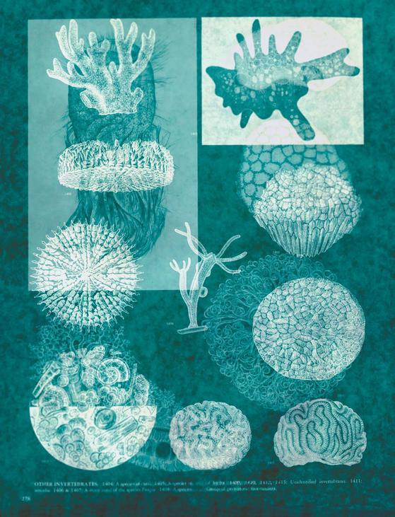 'Good-bye Paradise Green 01'(2018), Archival Pigment Print, 75 x 57.5 cm 19C 생물 도감을 이용해 포토그램 기법으로 제작했다.