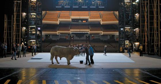 쇤베르그 오페라 '모세와 아론' 무대에 쇤베르그 음악으로 훈련 받은 살아있는 흰 소를 올렸다.