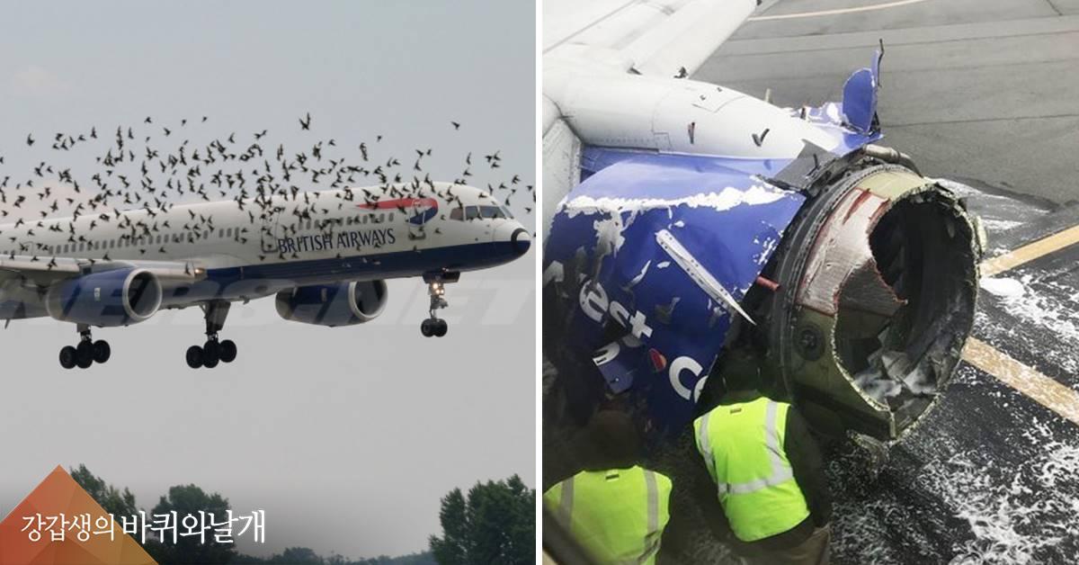 2㎏도 안되는 새가 64톤 흉기로...버드스트라이크의 공포