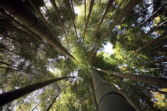 [편집장 레터] 봄바람 살랑이면 대숲에 가야 합니다