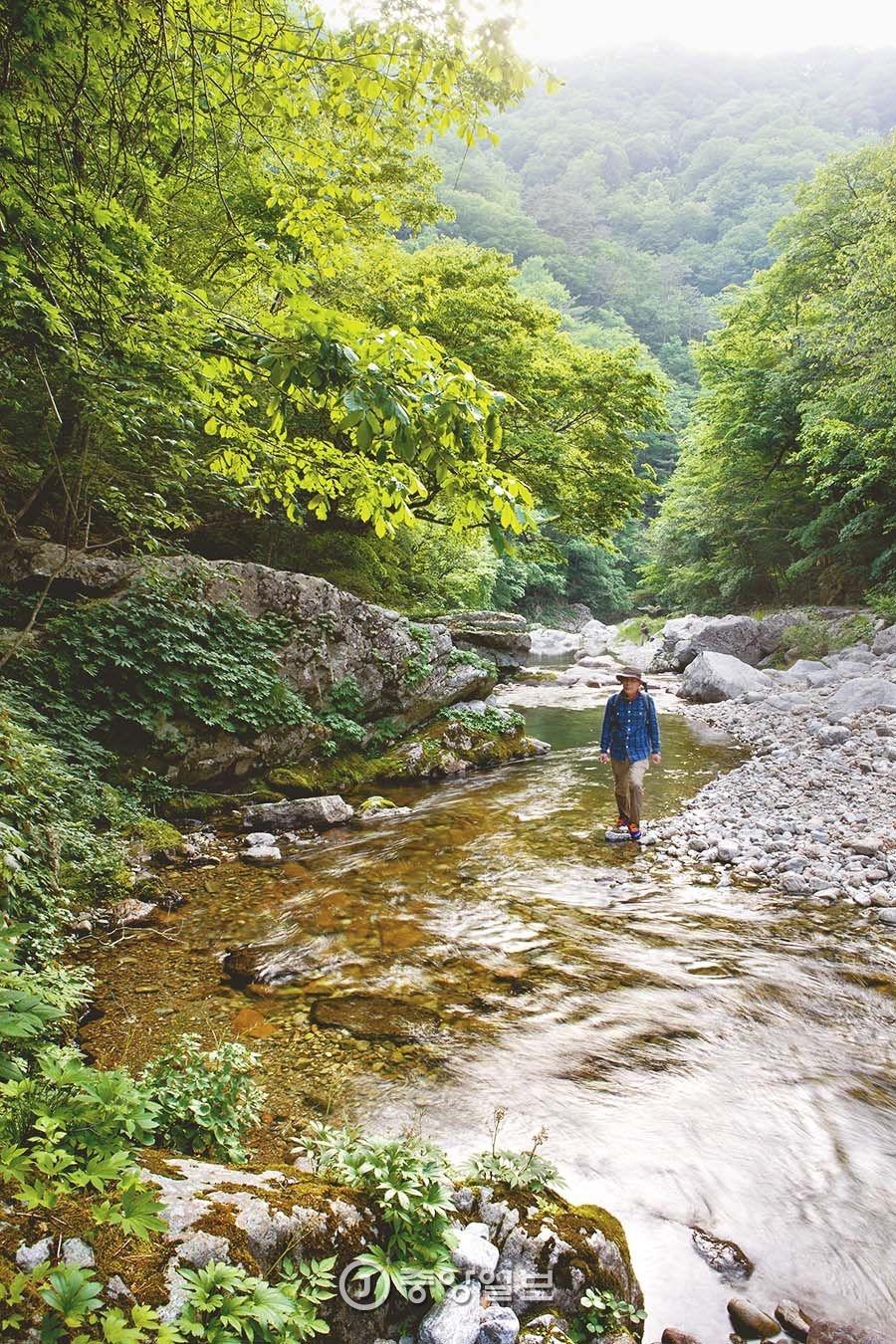 [커버스토리] 원시림 품은 맑은 계곡 발 담그니 절로 냉찜질