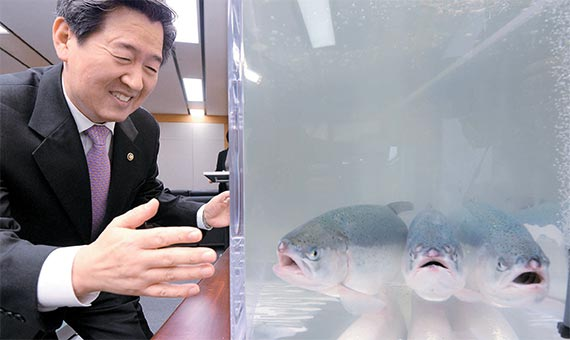 윤학배 해양수산부 차관이 7일 정부세종청사에서 아시아에서 처음으로 외해(트인 바다) 가두리 양식에 성공한 국내산 연어를 살펴보고 있다. 국내산 양식 연어 500t은 8일 출하된다. [뉴시스]