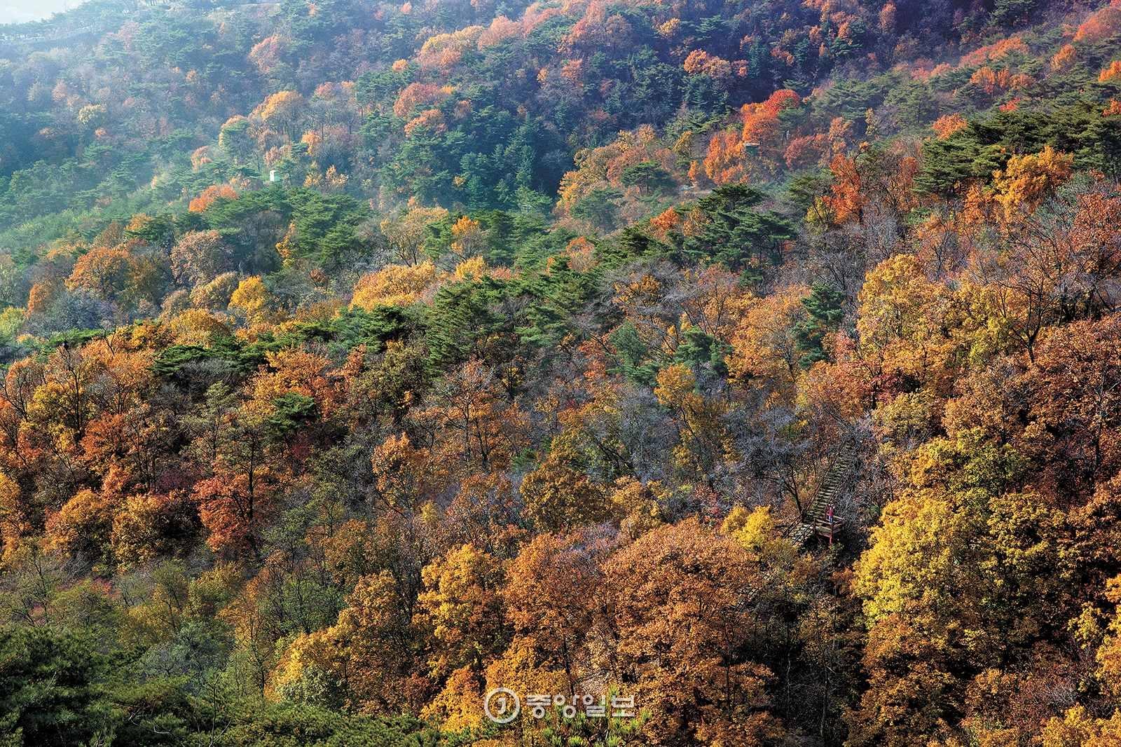 북악하늘길 2산책로는 1968년 북한 특수부대가 서울에 침투한 1·21사태 이후 41년 동안 일반인 출입이 금지됐던 성북천 계곡을 지난다. 북악산 동쪽 능선에서 내려다본 성북천 계곡의 단풍.