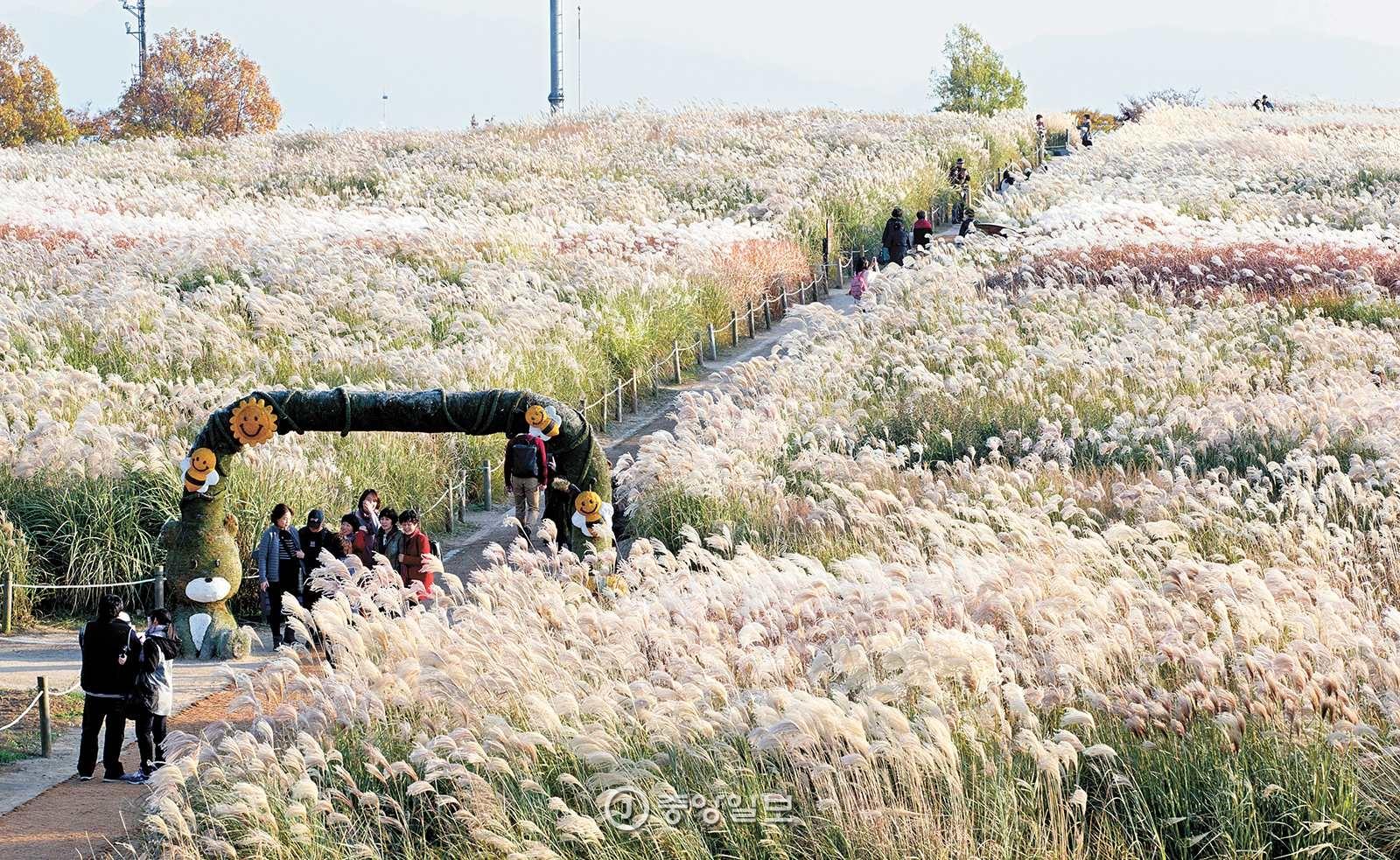마포난지생명길 1코스의 하이라이트는 하늘공원 억새밭이다. 12월 중순까지 은빛 억새의 장관이 펼쳐진다.