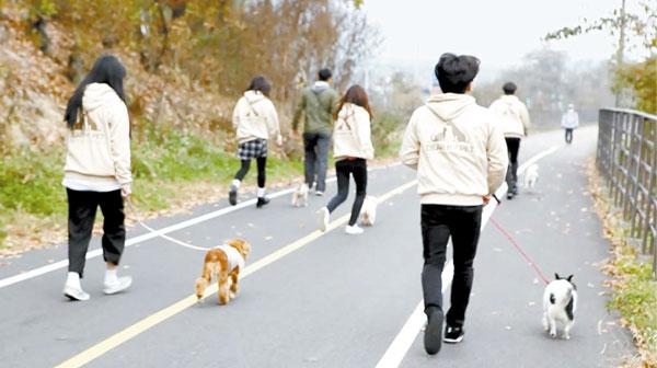 지난 4일 경기도 남양주시에 있는 동물자유연대 남양주 반려동물복지센터를 찾은 디어마이펫 봉사단이 유기견과 산책하고 있다. [사진 디어마이펫]