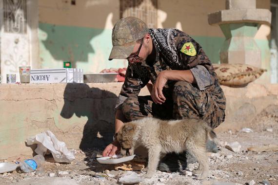 모술을 회복한 이라크 군이 굶주린 강아지에게 먹이를 주고 있다.
