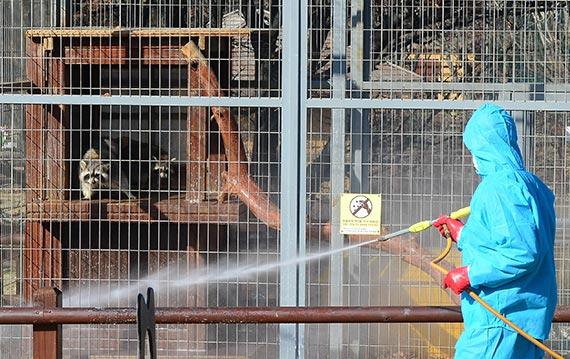 인천대공원 직원들이 28일부터 임시 휴원에 들어간 어린이동물원에서 방역 작업을 하고 있다. [뉴시스]