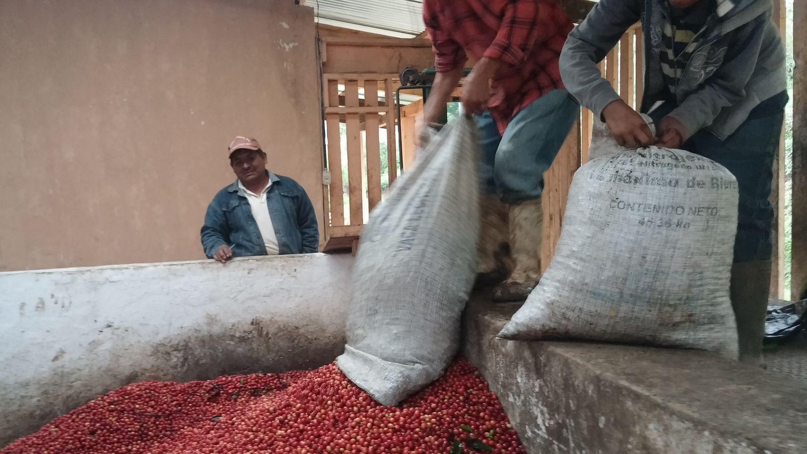 치코흐 커피농장.