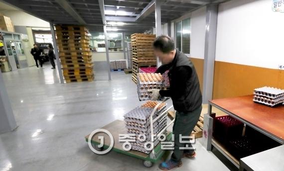 서울 금천구 독산동의 계란 도매업장. 평소에는 200판을 수레에 가득 담아 옮기지만 조류독감으로 인해 옮길 계란 자체가 거의 남지 않았다. [중앙포토]