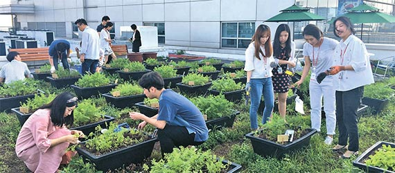 지난해 가을 롯데홈쇼핑 임직원들이 '옥상 소울 텃밭'에서 당근을 수확하는 모습. [사진 롯데홈쇼핑]
