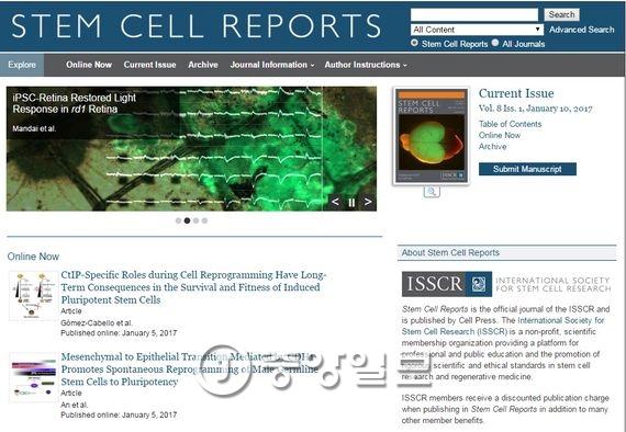 미국 과학지 스템셀리포트 홈페이지에 소개된 일본 이화학연구소의 유도만능줄기세포(iPS 세포)를 이용한 시세포 복원 연구 보고서. [스팀셀리포트 홈페이지 캡처]