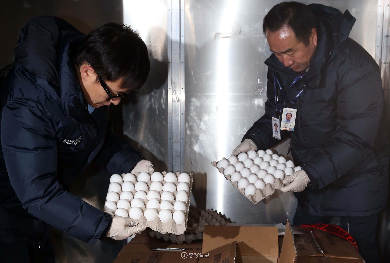 미국산 달걀의 정식 수입에 앞서 정밀검사를 위한 샘플용 달걀(150kg.2160개)이 12일 아시아나항공편을 통해 인청국제공항 화물터미널에 도착했다.농축산식품부 직원들이 검역을 하기 위해 미국산 흰색 달걀을 상자에서 꺼내고 있다 [김상선 기자]