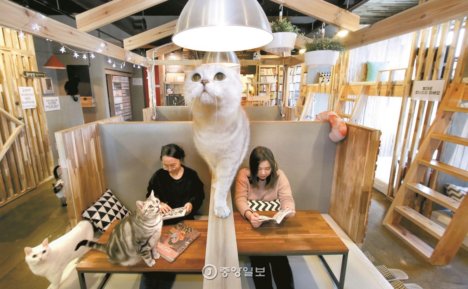 대학로에 있는 금고양이카페에는 고양이 10마리가 산다.